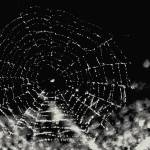 """Spiderweb"" by jsenior"