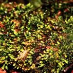 """Forest Carpet"" by jsenior"