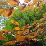 """""""orange&green"""" by Sparkimarki"""