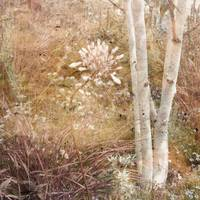 Pretty Woodland Variation 1