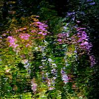 Giverny Spirit VI