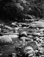 Black and White Brook