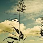 """Plants With Sky"" by Grebo"