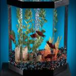 """fish tank"" by atlasphotographic"