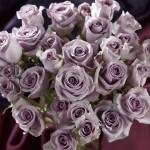 """purple roses"" by atlasphotographic"