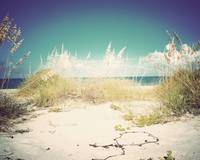 Surroundings - Sunny Sanibel - Vintage