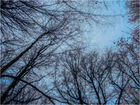Trees against blue sky