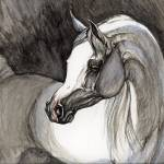 """grey arabian horse"" by tarantella"