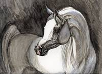 grey arabian horse