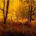 """""""Wild marshland I"""" by Woodsman"""