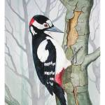 """Greater Spotted Woodpecker"" by royboobyer"