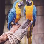 """Macaws"" by dlwilson"