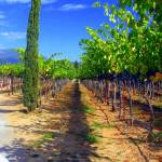 """The Vineyard"" by luv4pix"