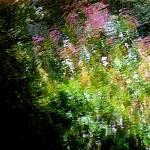 """""""Giverny spirit XXIX"""" by Woodsman"""