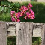 """""""On the Fence"""" by TheBullyBoutique"""