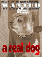 Wanted: a real dog