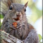 """Went To FL and All I Got Was Another Squirrel Pic"" by GlendaBorchelt"