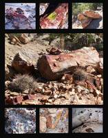 Petrified Wood Abundance