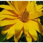 """""""flower 2"""" by mferraton"""