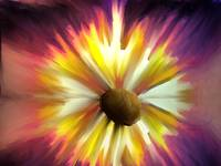 The Urban Garden Series - Daisyflame (a sunflower