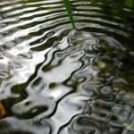 """water ripple zacharyallenpilz photography"" by zacharyallenpilz"