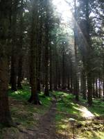 Dublin Mountain Forest