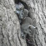 """Baby Squirrel Trio"" by bettytong"