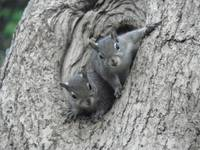 Baby Squirrel Duo