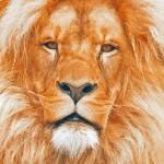 """Old Lion"" by artstoreroom"