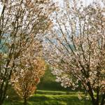 """Spring"" by Apc"