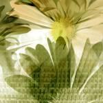 """""""Daisy Mesh"""" by RuthPalmer"""