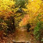 """Autumn Leaves - Shenandoah National Park"" by mferraton"