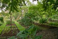 In the Physic Garden, Chelsea 13