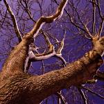 """Purple Tree"" by Grebo"