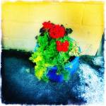 """""""Potted Flowers"""" by NYShooter"""