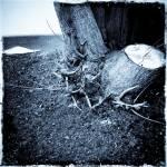 """Tree Stump"" by NYShooter"
