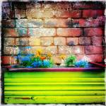 """""""Flowers and Wall"""" by NYShooter"""