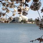 """Jefferson Memorial with Cherry Blossoms"" by mferraton"