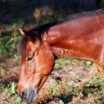 """pony 1"" by greyloch"