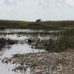 """""""Everglades"""" by greyloch"""