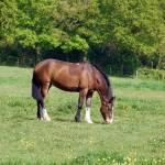 """""""horse summer"""