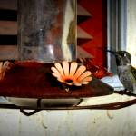 """Hummingbird 2"" by expressionsbytricia"