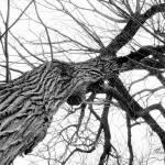 """Thunder Tree"" by BrHoOoM"