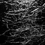"""""""Night Tears"""" by BrHoOoM"""