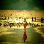 """boy chasing birds"" by Spangles44"