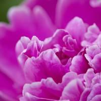 Pretty petals Art Prints & Posters by Jenn Haynal