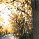 """Princeton Walkway"" by HollySchwiebert"