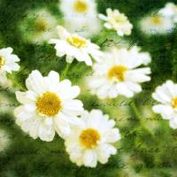 Whispers of Spring Art Prints & Posters by Cathie Tyler
