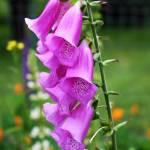 """""""Garden Bell"""