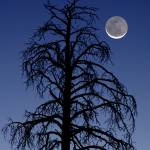 """Cescent Moon & Pine"" by FrankZullo"